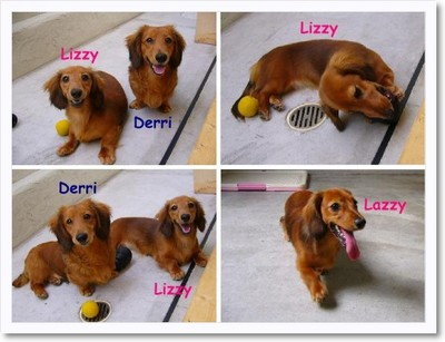 [photo30135716]Lizzy&Lazzy&Derri.jpg